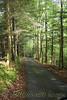 Hiking trail to Abrams Falls