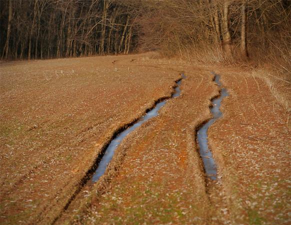 Frozen in Their Tracks..a Winter Field