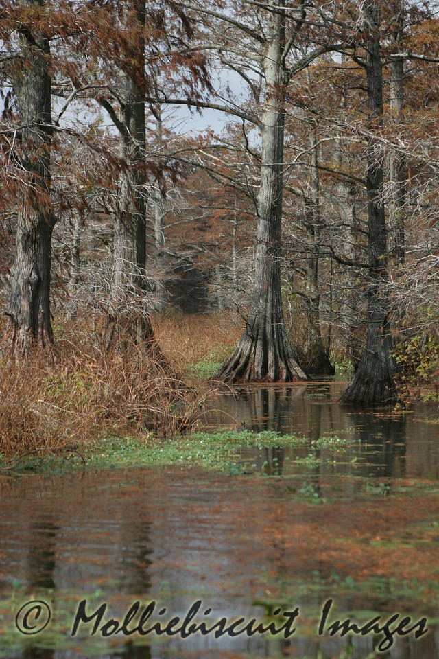 Reelfoot Shallows