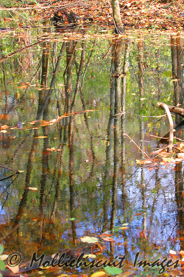 Backwater reflections
