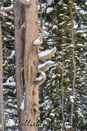 Wood and snow at south entrance of Yellowstone