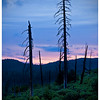 Foresta Sunset