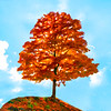 Colorful tree on hilltop     Paintography