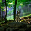 Young wolf in pretty setting