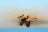 "pelicans at  Harbour Town Hilton Head <a href=""http://dan-friend.artistwebsites.com/index.html"">http://dan-friend.artistwebsites.com/index.html</a>"