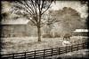 "Small farm in West Virginia <a href=""http://dan-friend.artistwebsites.com/index.html"">http://dan-friend.artistwebsites.com/index.html</a>"