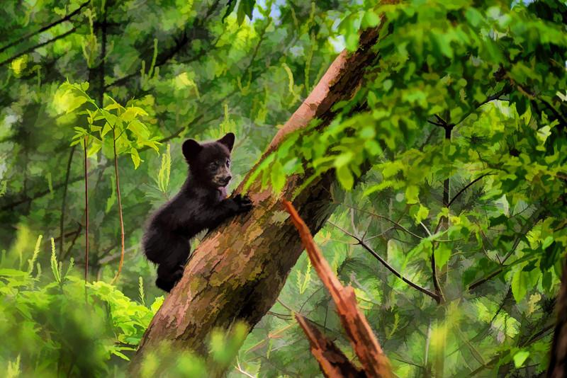 "Balck bear climbing in tree and looking around  - artistic <a href=""http://dan-friend.artistwebsites.com/index.html"">http://dan-friend.artistwebsites.com/index.html</a>"