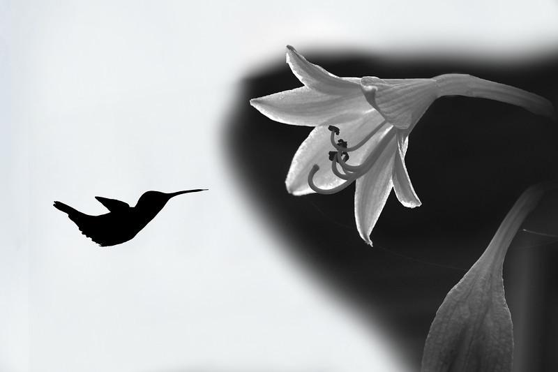 "hummingbird with tongue out <a href=""http://dan-friend.artistwebsites.com/index.html"">http://dan-friend.artistwebsites.com/index.html</a>"