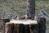 Mr squirrel raids the mini bar