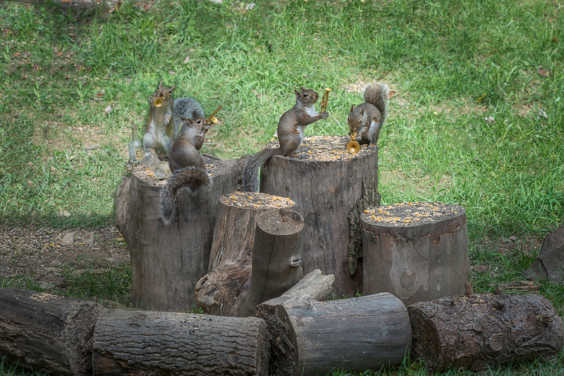 The Grey Squirrel Rowdy Tails Band making sweet music