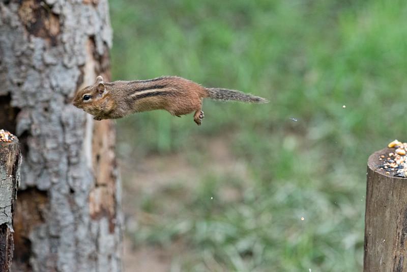 Jumping comes naturally