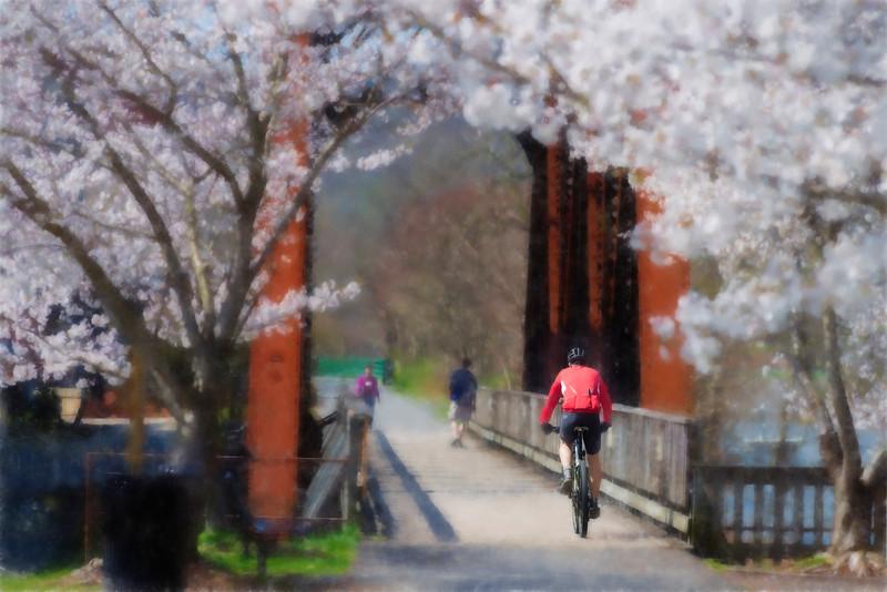 Biker crossing bridge