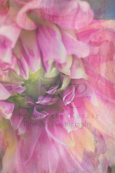 Textured Pink Dahlia