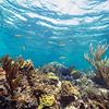 DSC03608 David Scarola Photography, Near Scotland Cay, Bahamas Reef