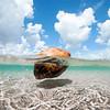 DSC07403 David Scarola Photography, Jupiter Coconut