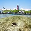 DSC03189 David Scarola Photography, Snapper Point in Marsh Harbour, June 2017