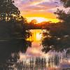 DSC02761 David Scarola Photography, Abacoa Nature Preserve, sep 2017