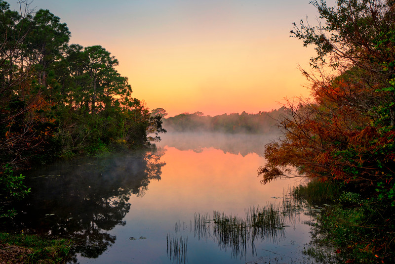 DSC06474 David Scarola Photography, Abacoa Nature Preserve in Jupiter Florida, sep 2017