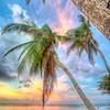 DSC09150 David Scarola Photography, Key West, Dec 2017