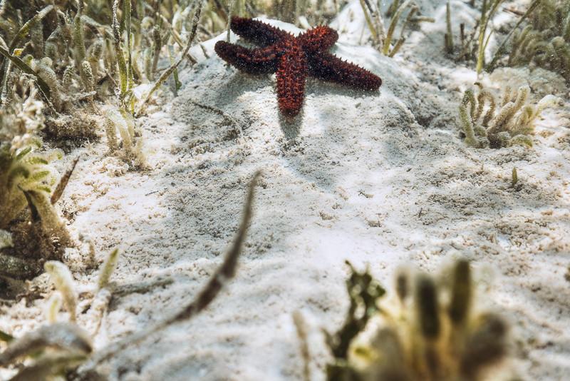 DSC03159 David Scarola Photography, Bahamas Starfish at Snapper Point