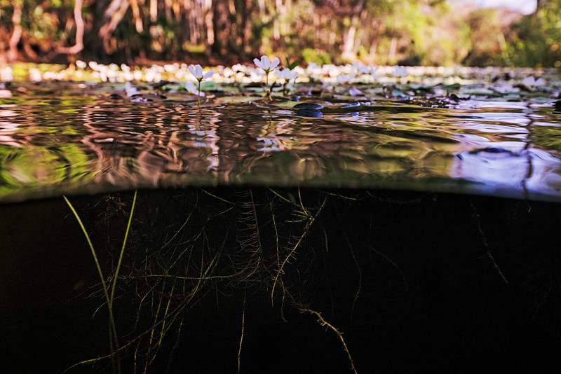 DSC09925 David Scarola Photography, Riverbend Park in Jupiter Florida
