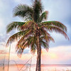 DSC09159 David Scarola Photography, Dec 2017, Key West