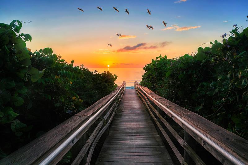 DSC06192 David Scarola Photography, Jupiter Beach Sunrise, Jupiter Florida, May 2017