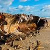DSC00472 David Scarola Photography, Jupiter Beach Treasure, sep 2017