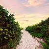 DSC06479 David Scarola Photography, Jupiter Inlet Beach Access, Jupiter Florida,s ep 2017