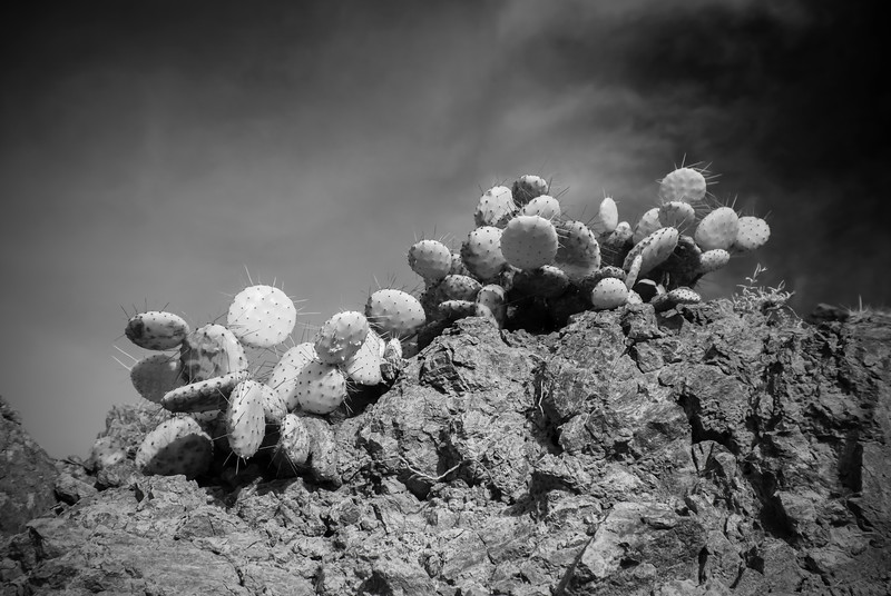 Cactus, Salina Cruz, Mexico
