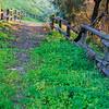 San Juan Capistrano Trail