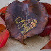 Heartfelt Autumn Leaf