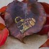 Heartfelt Autumn Leaf