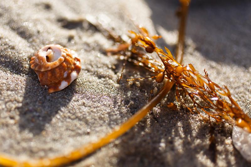 Laguna Beach Shell