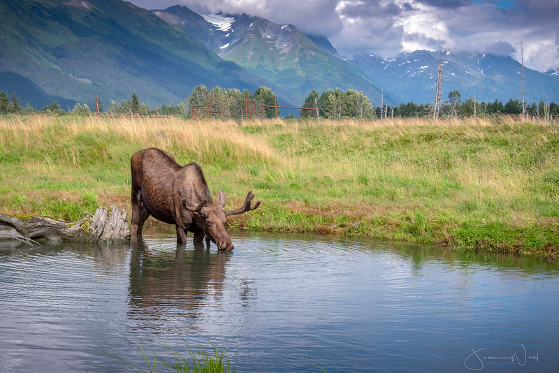 Long Moose Drink, Portage Alaska