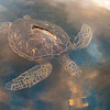 """""""TRANQUIL TURTLE"""""""
