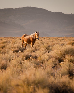 Horse_12_0331_001