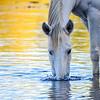 Blowing Bubbles Salt River Wild Horse AZ