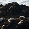 """SNOOZING SEA LIONS"""