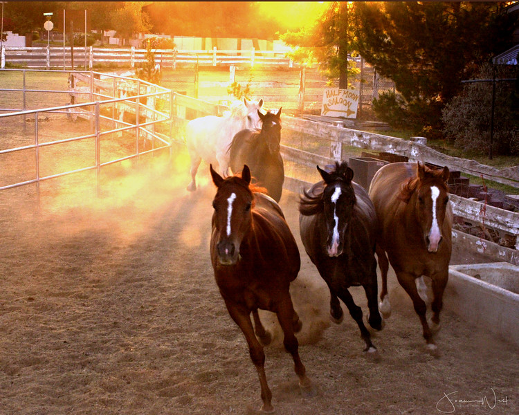 Three Blazes, Wildhorse Ranch Rescue Gilbert AZ