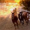Three Blazes, Wildhorse Ranch Rescue Gilbert AZ