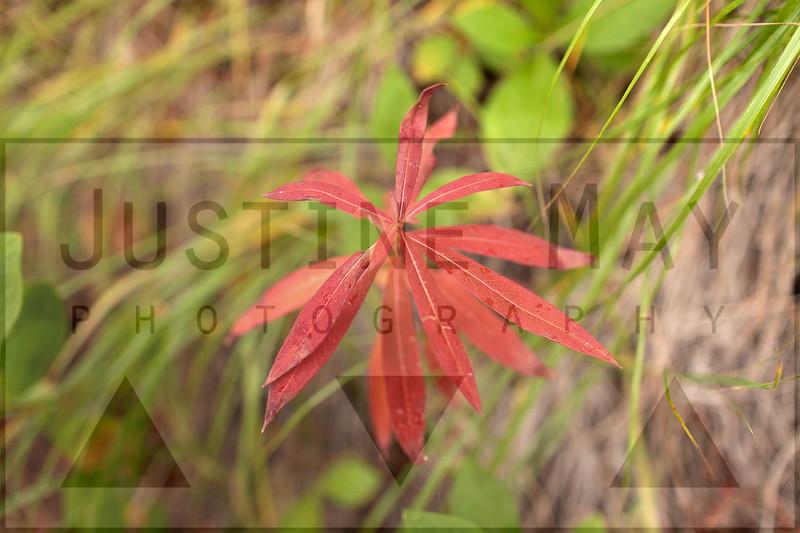 Fierceness of Red