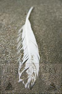 Feathered Beach