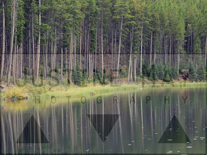 Yellowstone Pond