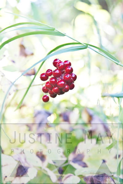 Blood Red Berries