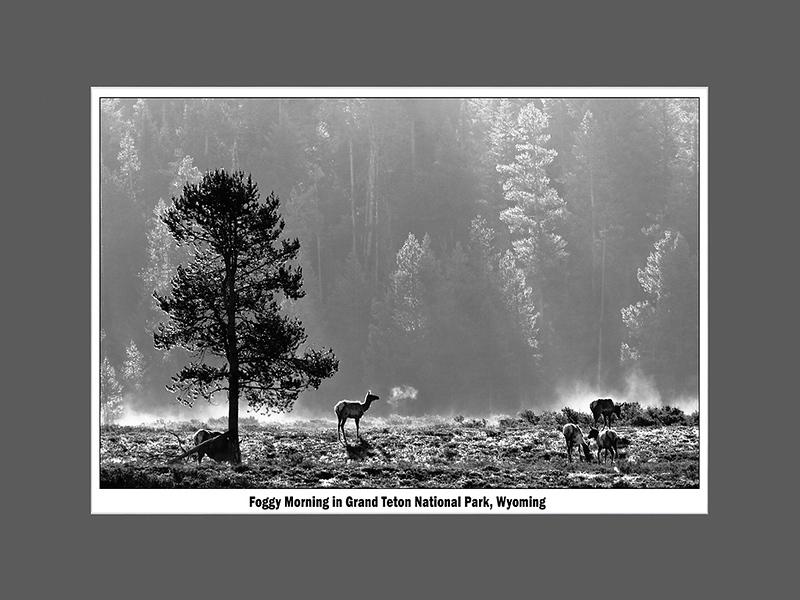 Foggy Morning in Grand Teton National Park