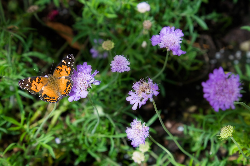 """<b>""""PICTURE PERFECT PAINTED LADY""""</b>"""
