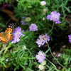 "<b>""PICTURE PERFECT PAINTED LADY""</b>"
