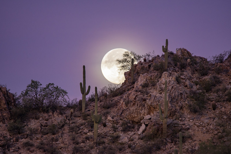 Lavender Dawn and Super Moon Setting Dinosaur Mt AZ