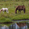 Brown Horse and Foal
